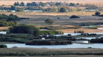 view_over_rye_bay_c.blackburnheader