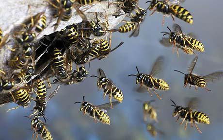 wasp-nest_1592591c