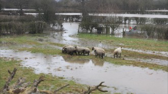 romney marsh under water