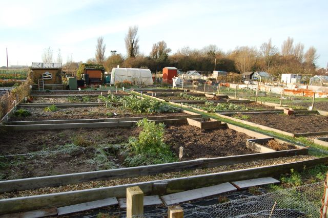 Thieves break into allotments
