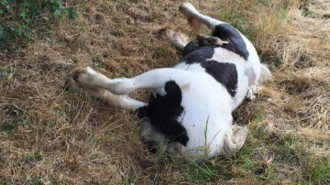 Dumped-pony-aldington