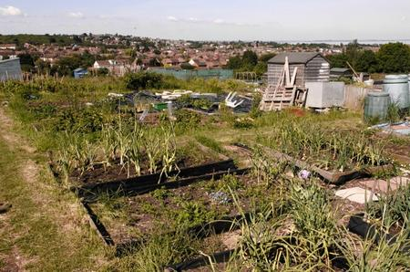 Thoughtless youths invade allotments in Hythe